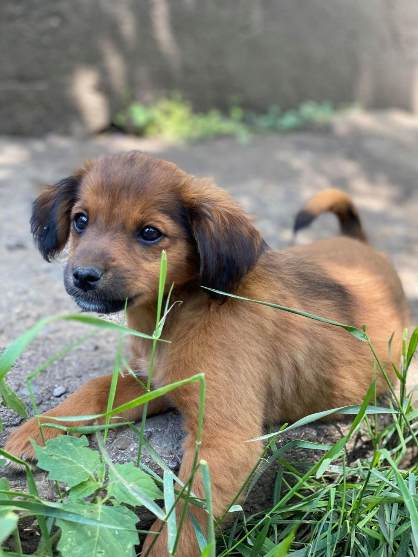 Litchi-femelle- fourrière de Târgu Frumos - réservée adoption (02) Litchi21