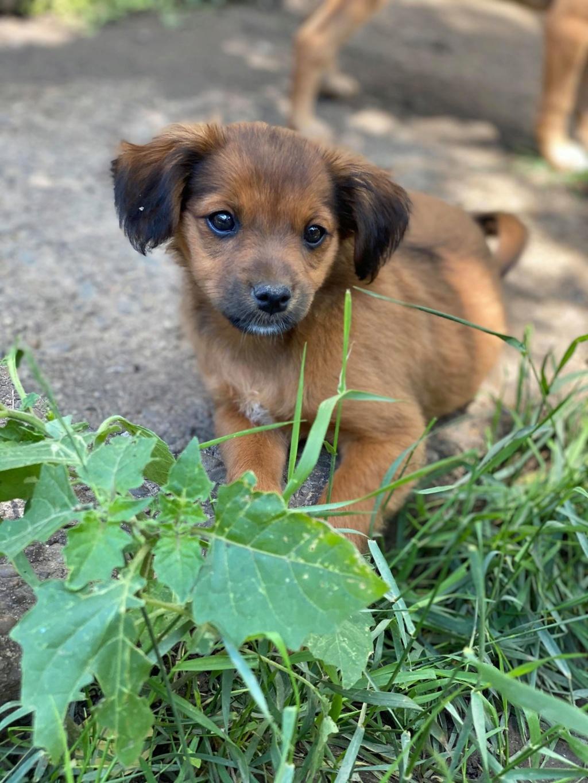 Litchi-femelle- fourrière de Târgu Frumos - réservée adoption (02) Litchi22