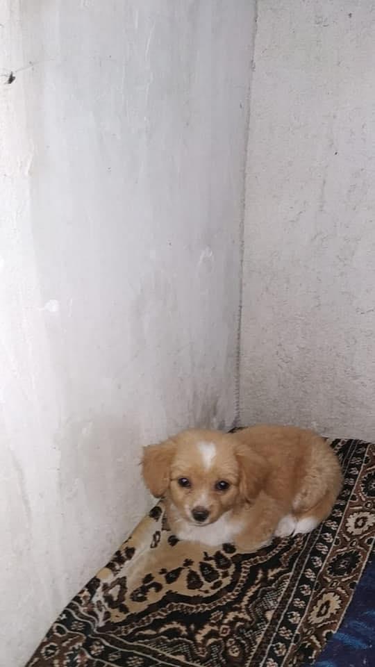 Lili (ex Lollipop) - femelle- chez une bénévole à Târgu Frumos - réservée adoption 67 Lollip17