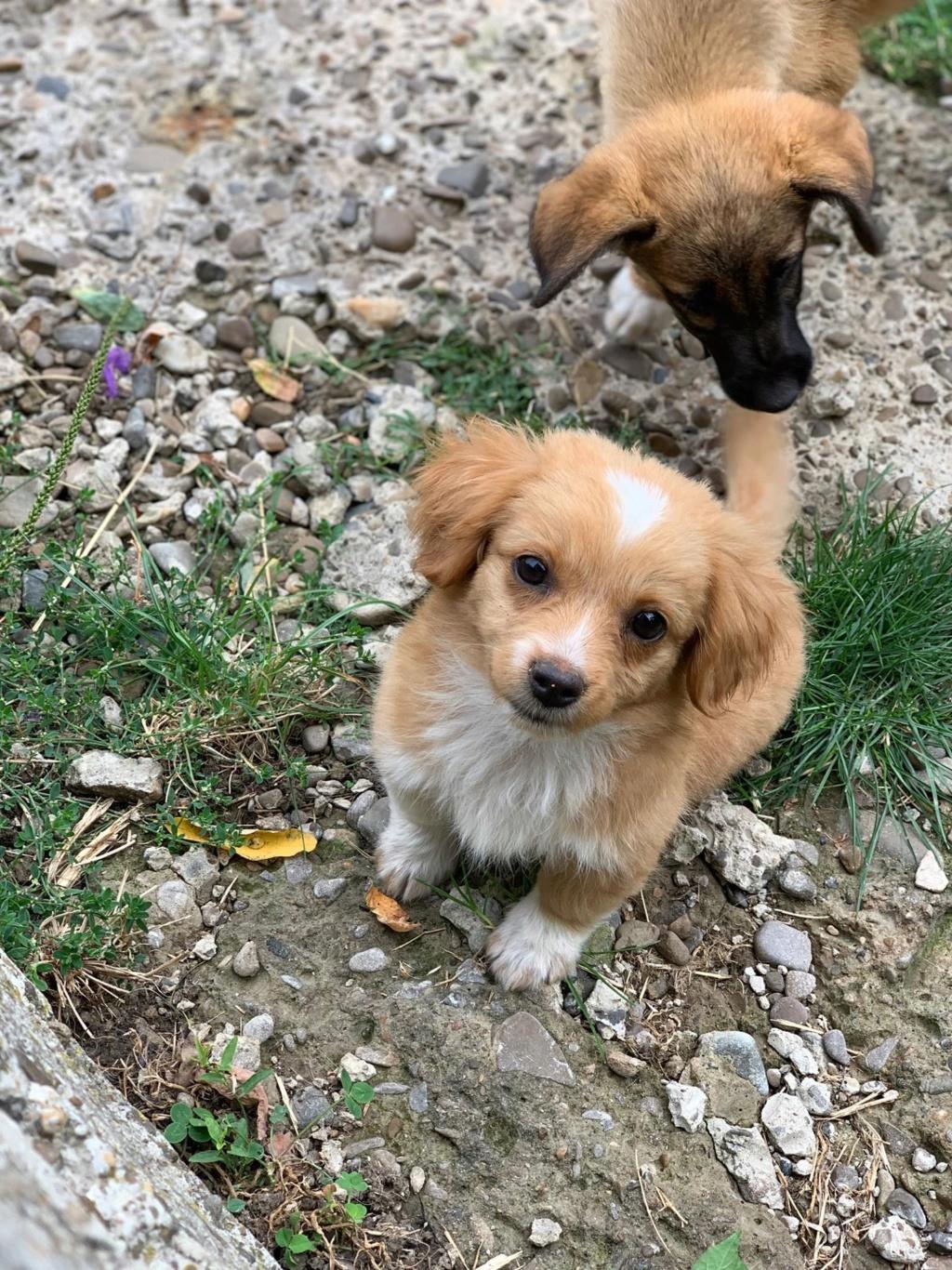 Lili (ex Lollipop) - femelle- chez une bénévole à Târgu Frumos - réservée adoption 67 Lollip20
