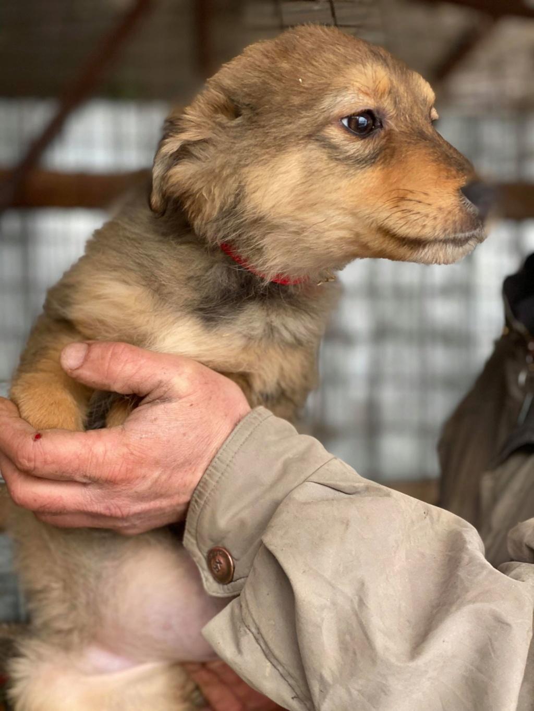 Lova- femelle- fourrière de Târgu Frumos - En Famille d'Accueil dans le 59 Lova_110