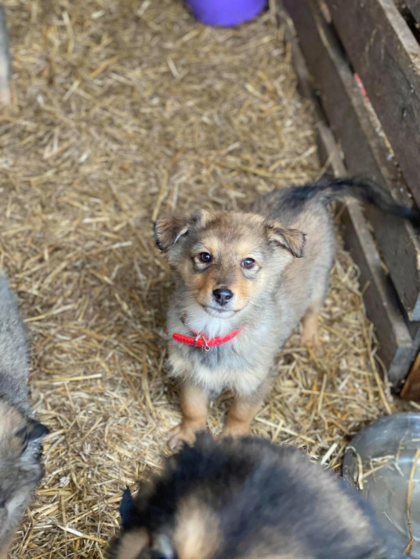 Lova- femelle- fourrière de Târgu Frumos - En Famille d'Accueil dans le 59 Lova_210