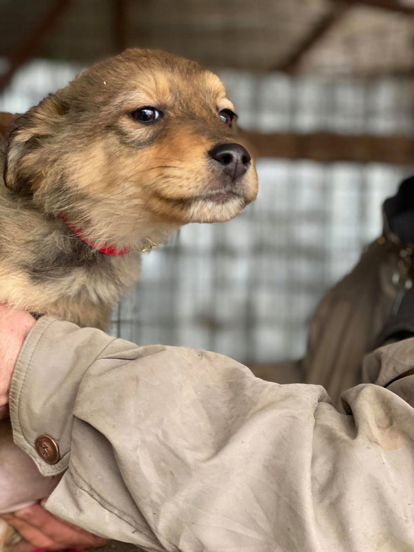 Lova- femelle- fourrière de Târgu Frumos - En Famille d'Accueil dans le 59 Lova_710