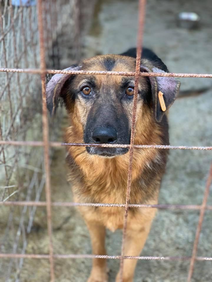 Lunky - mâle -  fourrière de Târgu Frumos - frais d'adoption réduits Lunkk10
