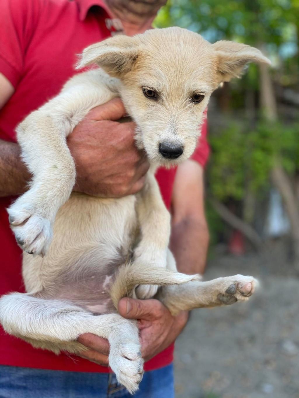 Maddox- mâle- fourrière de Târgu Frumos - réservé adoption (57) Maddox10