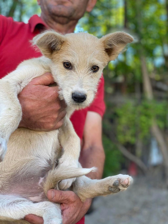 Maddox- mâle- fourrière de Târgu Frumos - réservé adoption (57) Maddox13