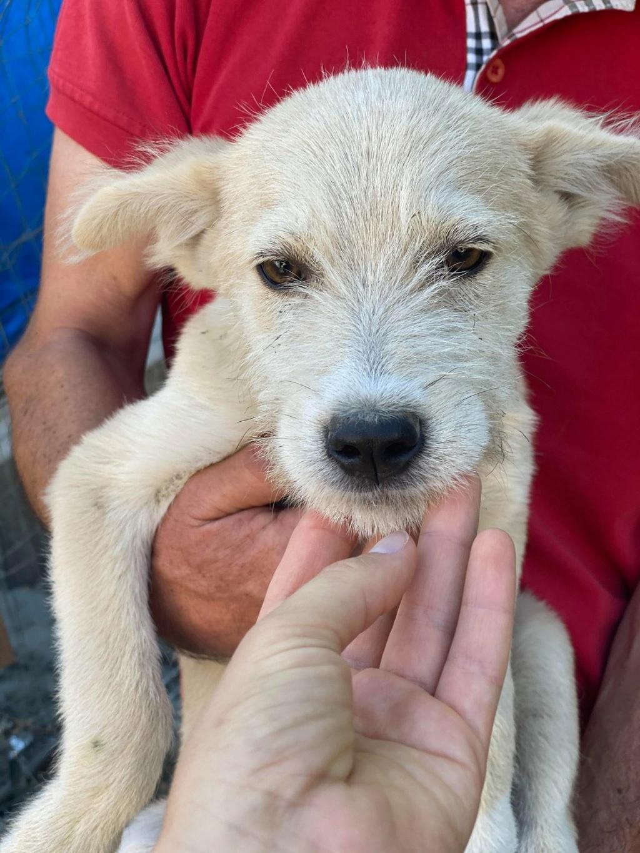 Maddox- mâle- fourrière de Târgu Frumos - réservé adoption (57) Maddox14