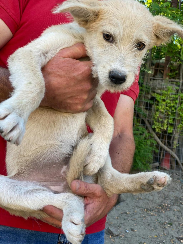 Maddox- mâle- fourrière de Târgu Frumos - réservé adoption (57) Maddox16