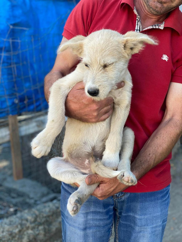 Maddox- mâle- fourrière de Târgu Frumos - réservé adoption (57) Maddox17