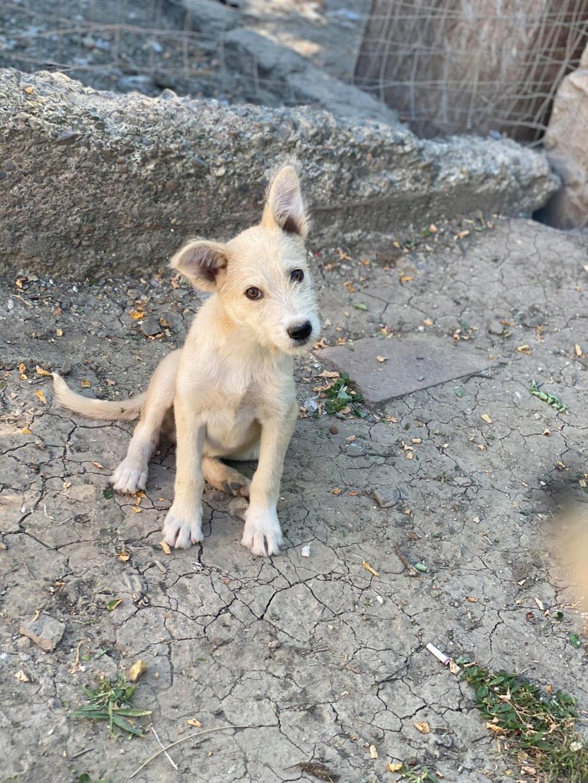 Maddox- mâle- fourrière de Târgu Frumos - réservé adoption (57) Maddox19