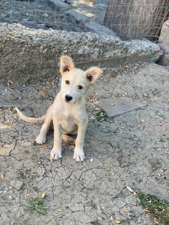 Maddox- mâle- fourrière de Târgu Frumos - réservé adoption (57) Maddox20