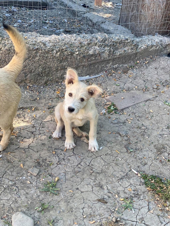 Maddox- mâle- fourrière de Târgu Frumos - réservé adoption (57) Maddox21