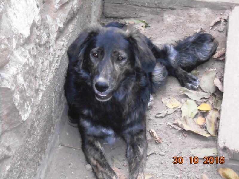 Maya (ex Mae West) - femelle- refuge d'Arad-réservée adoption 67 Mae_we16