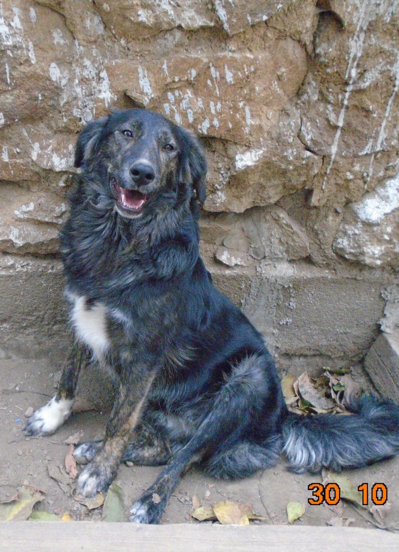 Maya (ex Mae West) - femelle- refuge d'Arad-réservée adoption 67 Mae_we24