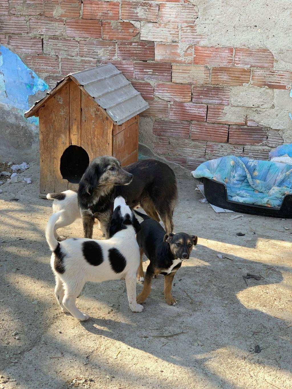 Maitika- femelle- refuge de Targu Frûmos Maitik19