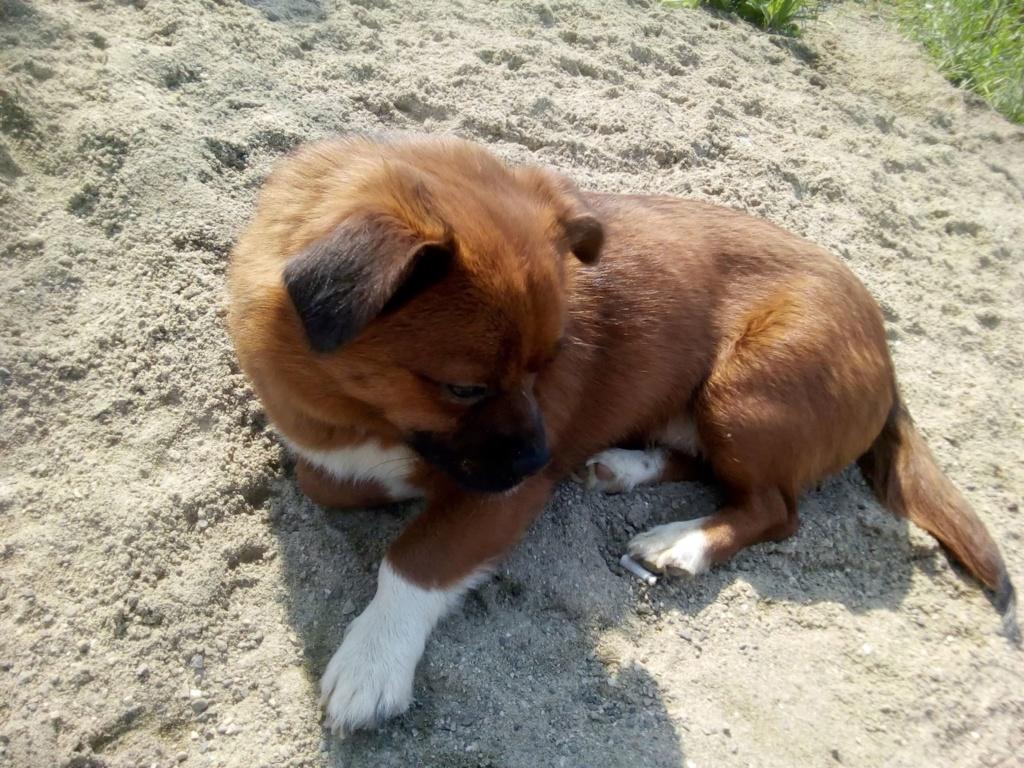 Manau-mâle- fourrière de Targû Frumos - Frais d'adoption réduits Manau_13