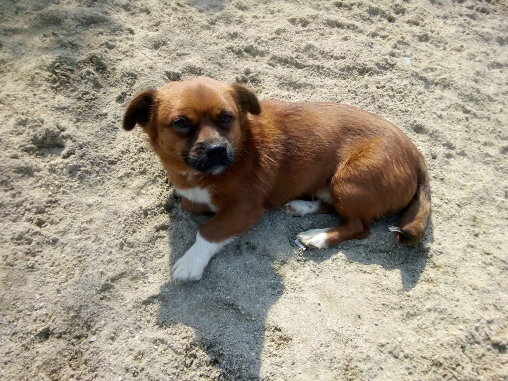 Manau-mâle- fourrière de Targû Frumos - Frais d'adoption réduits Manau_15