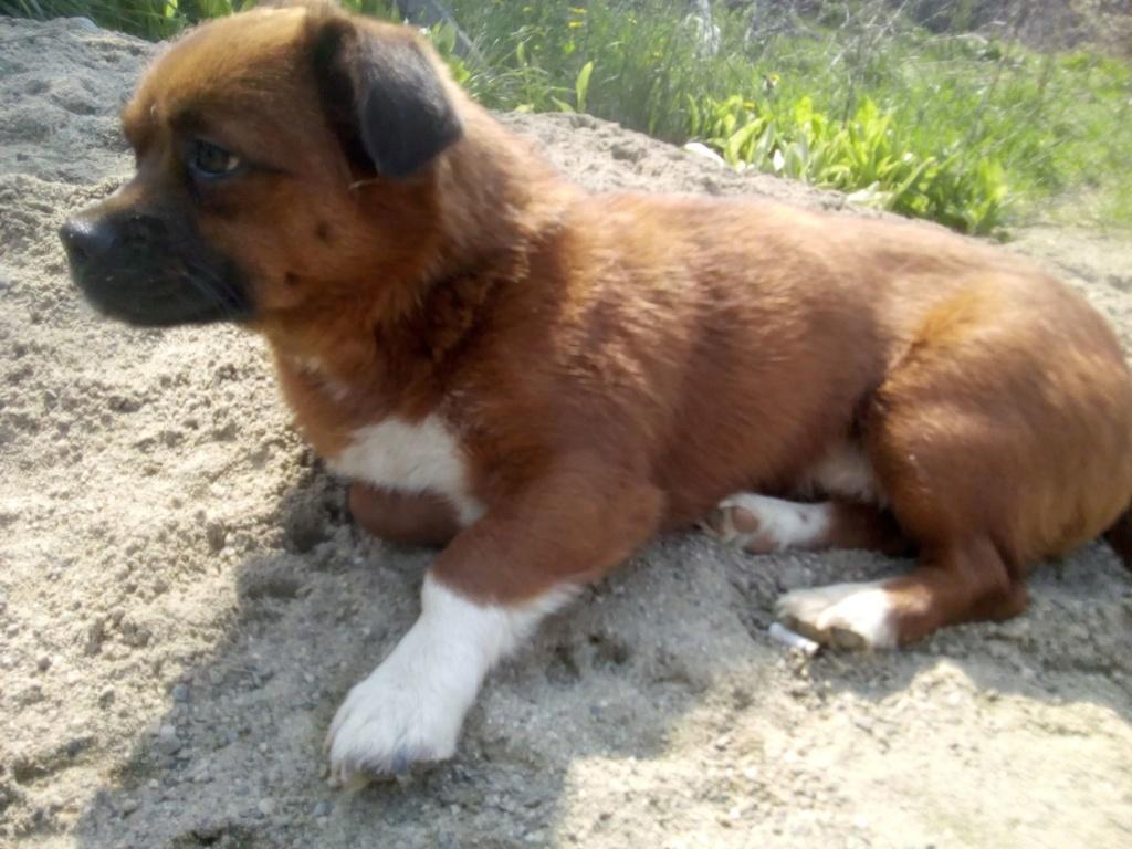 Manau-mâle- fourrière de Targû Frumos - Frais d'adoption réduits Manau_18