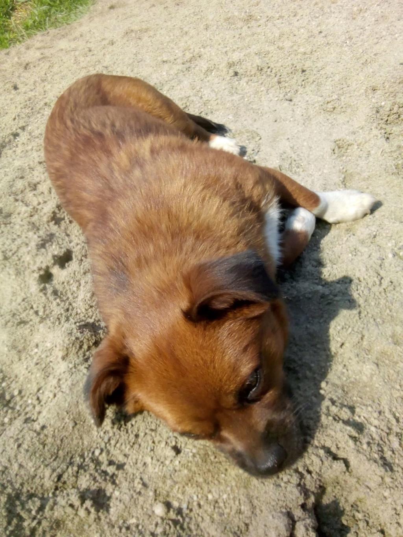 Manau-mâle- fourrière de Targû Frumos - Frais d'adoption réduits Manau_21