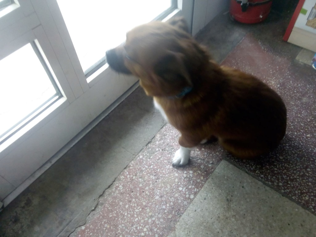 Manau-mâle- fourrière de Targû Frumos - Frais d'adoption réduits Manau_25