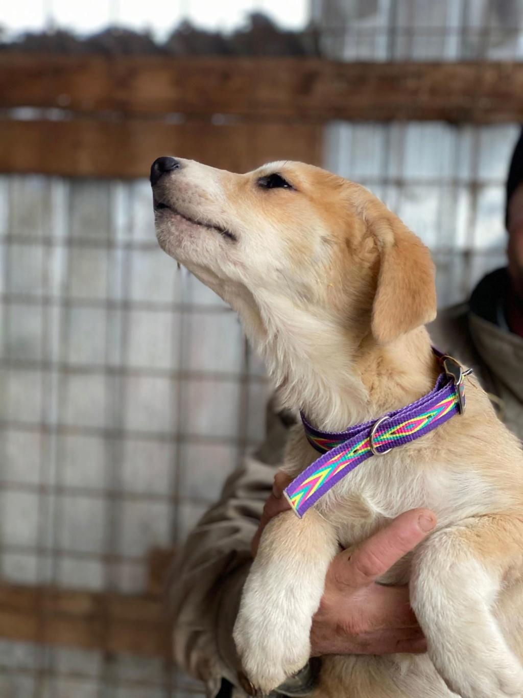Mareva- femelle- fourrière de Târgu Frumos - réservée adoption (57) Mareva10