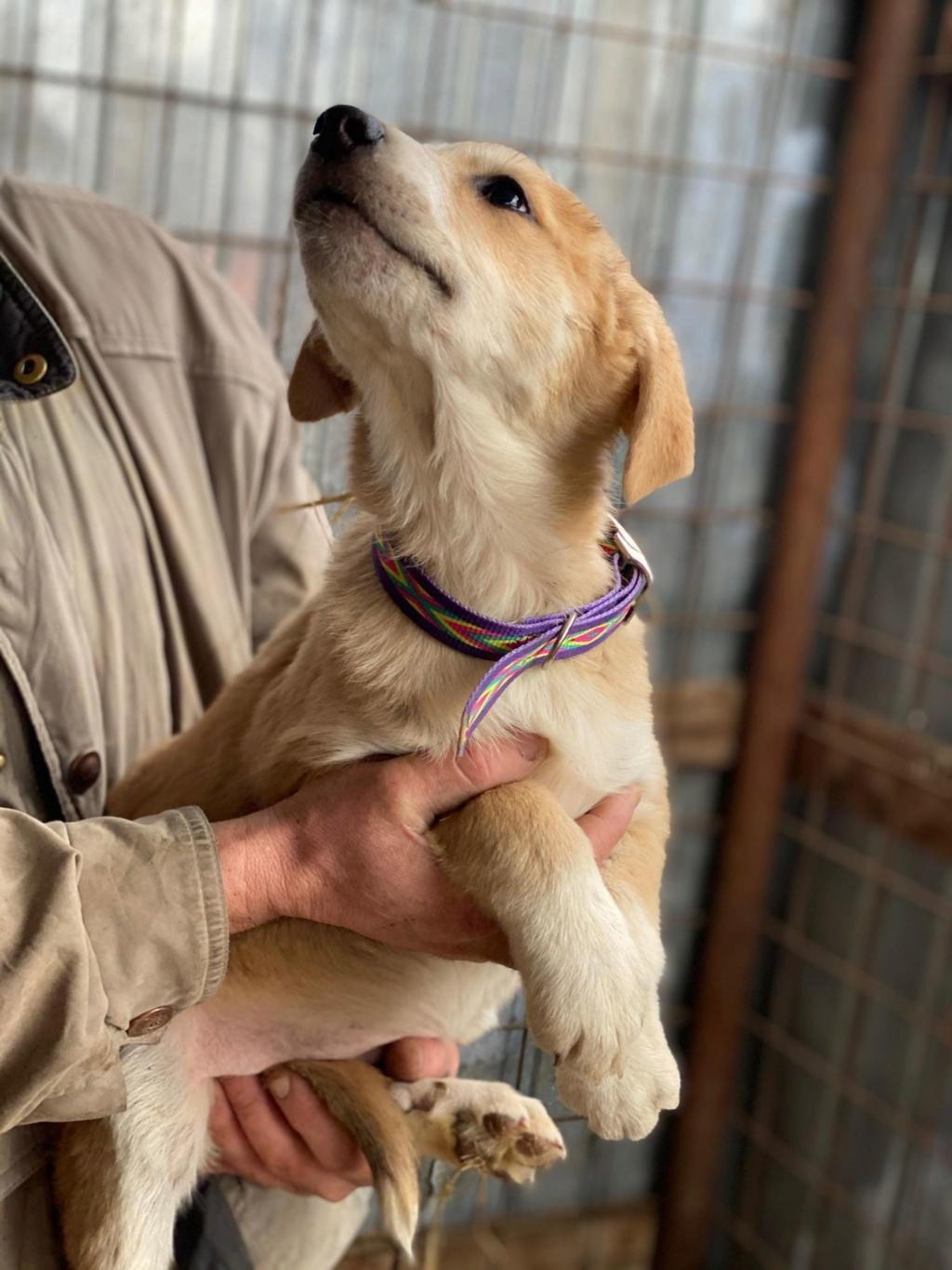 Mareva- femelle- fourrière de Târgu Frumos - réservée adoption (57) Mareva12