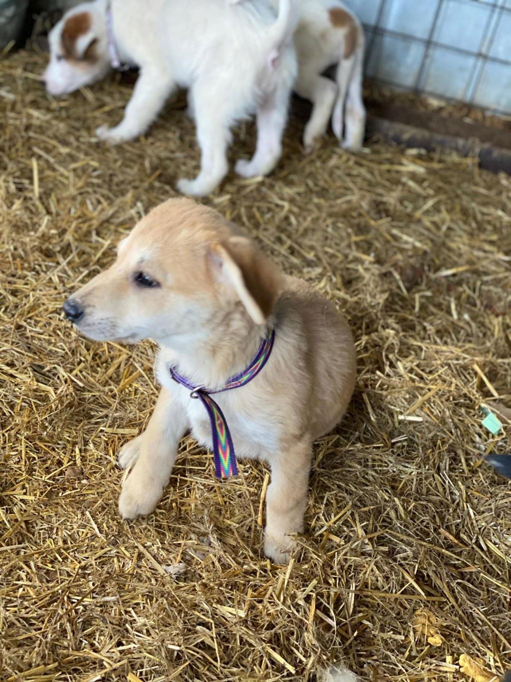 Mareva- femelle- fourrière de Târgu Frumos - réservée adoption (57) Mareva14