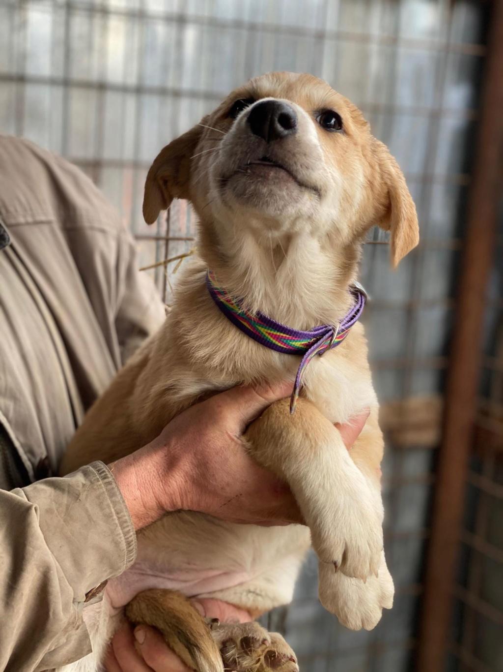 Mareva- femelle- fourrière de Târgu Frumos - réservée adoption (57) Mareva15