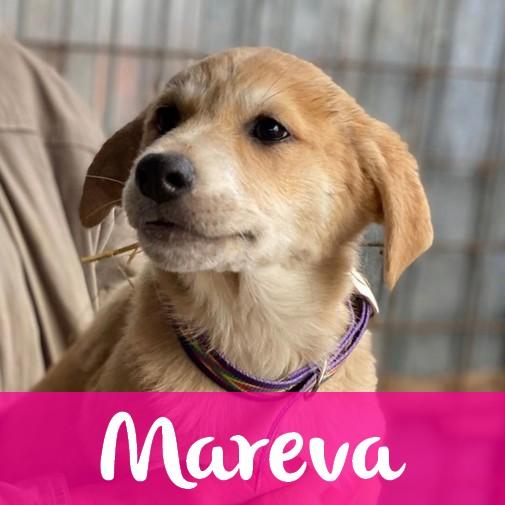 MarevaF