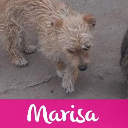 MarisaF