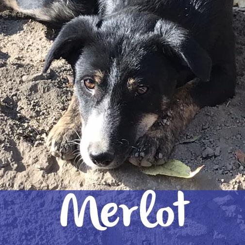 MerlotM