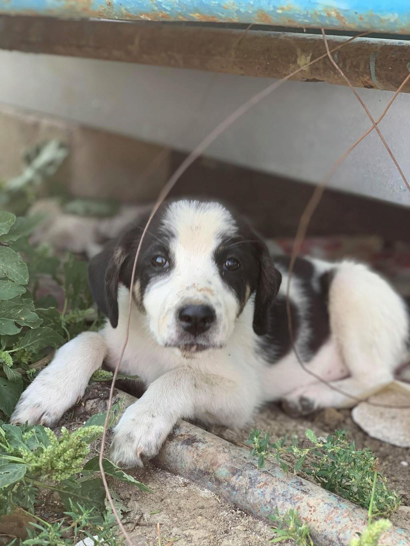Miacara- femelle- fourrière de Târgu Frumos - adoptée via Andreea Miacar10