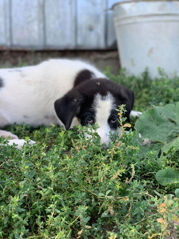 Miacara- femelle- fourrière de Târgu Frumos - adoptée via Andreea Miacar12