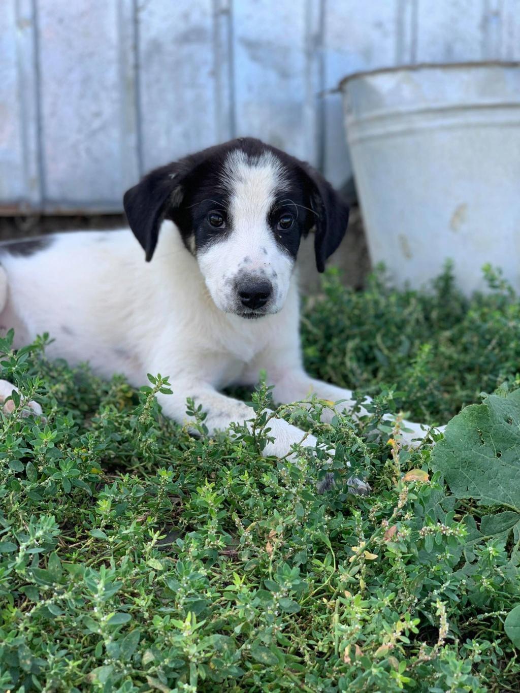 Miacara- femelle- fourrière de Târgu Frumos - adoptée via Andreea Miacar13