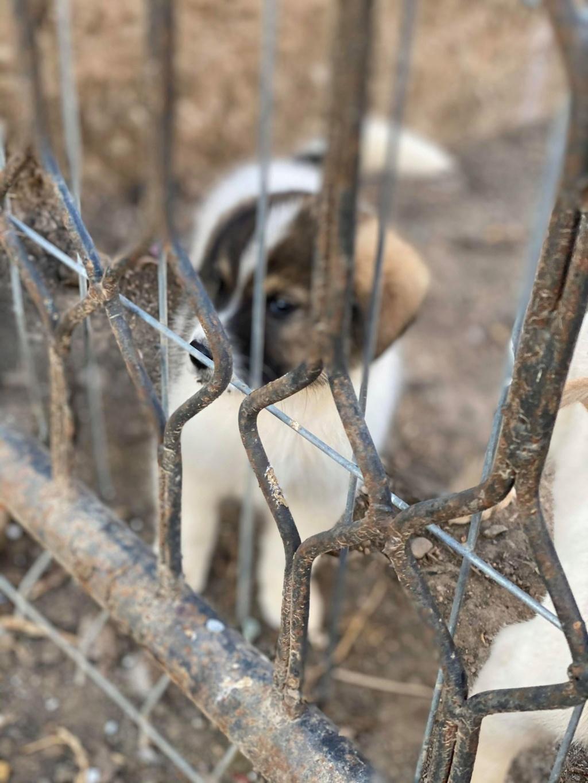Mickélé- mâle- fourrière de Târgu Frumos - adopté via Andreea  Mickzo13