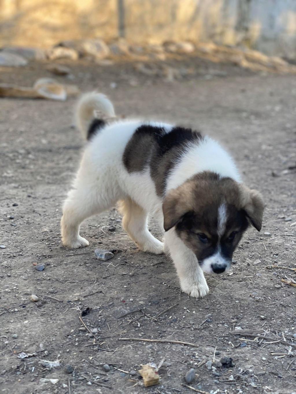 Mickélé- mâle- fourrière de Târgu Frumos - adopté via Andreea  Mickzo14