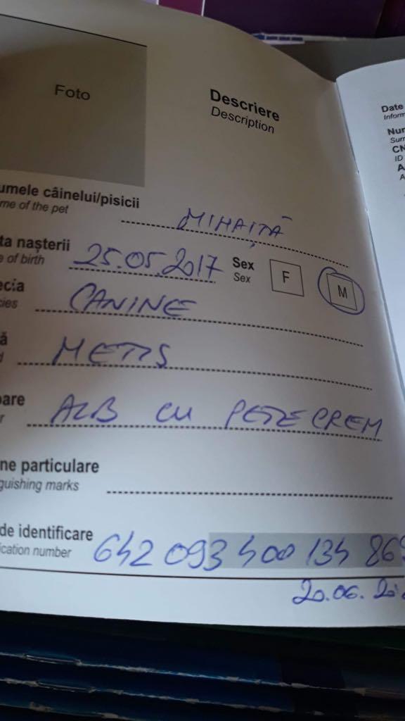 Mihaita- mâle- refuge d'Arad réservé adoption (67) Mihait10