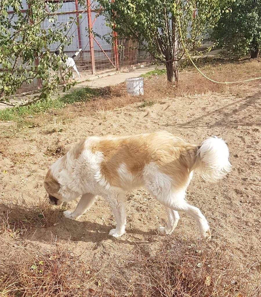Mihaita- mâle- refuge d'Arad réservé adoption (67) Mihait15