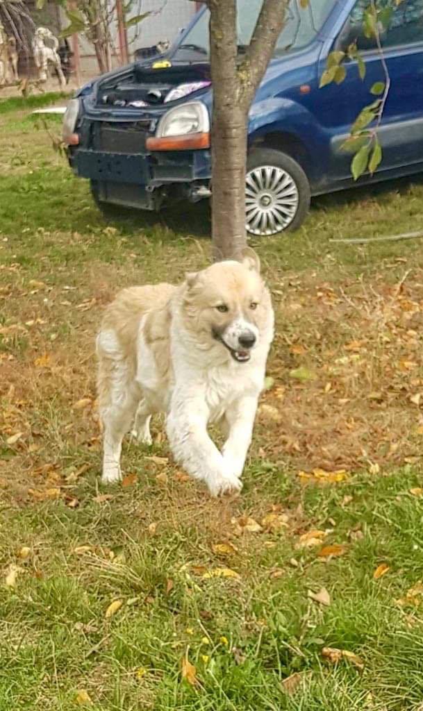 Mihaita- mâle- refuge d'Arad réservé adoption (67) Mihait20