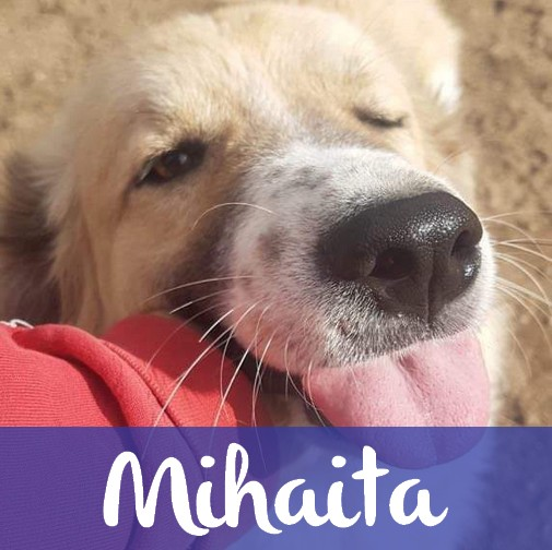 MihaitaM