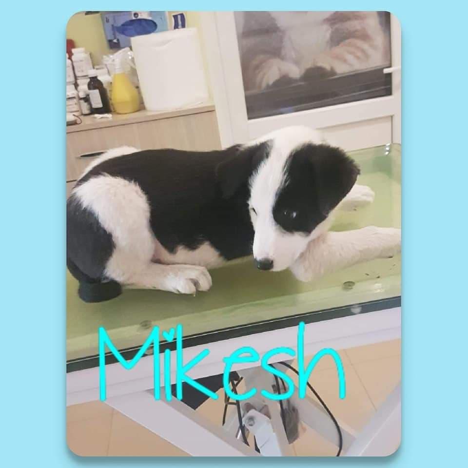 Mikesh-mâle -refuge d'Arad - adopté via Arad Mikesh10