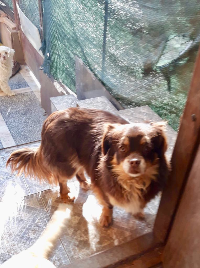 Millie- femelle- refuge d'Arad - adoptée en Hollande Millie12