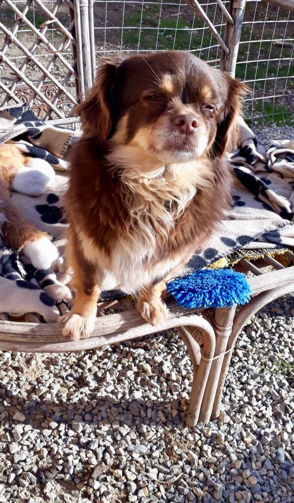 Millie- femelle- refuge d'Arad - adoptée en Hollande Millie16