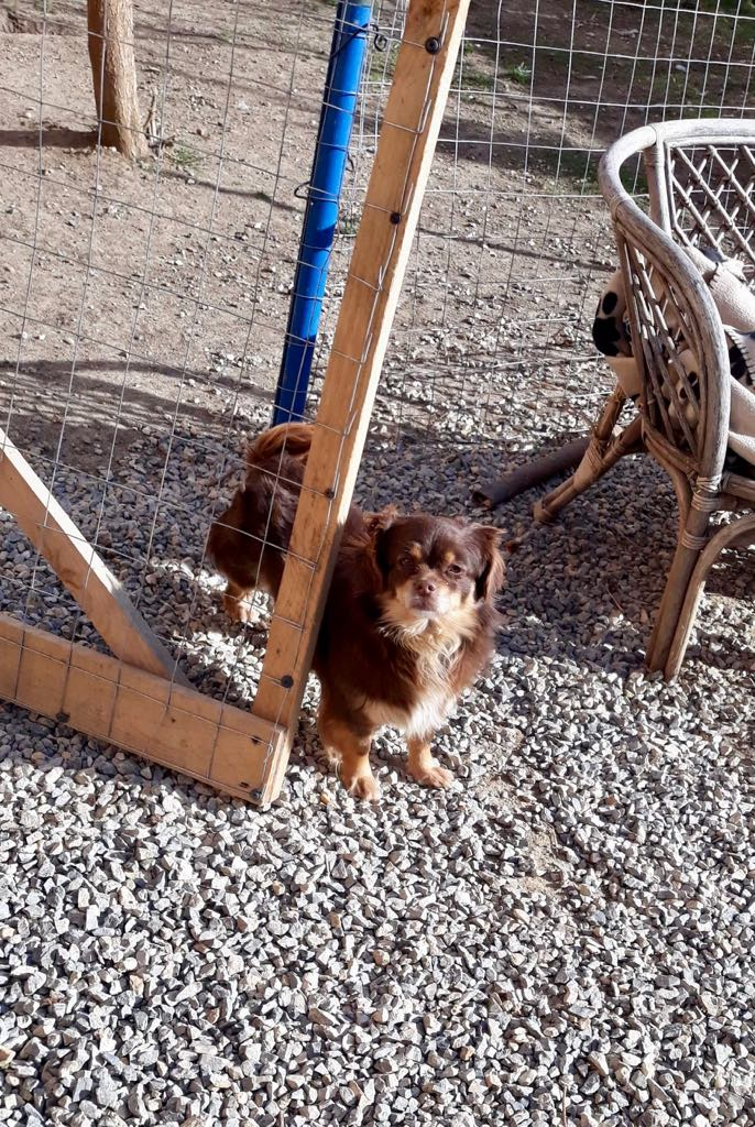 Millie- femelle- refuge d'Arad - adoptée en Hollande Millie19