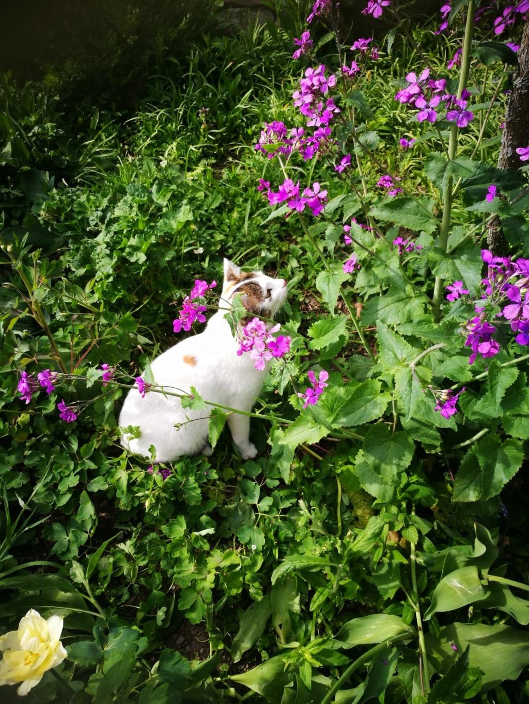 Mimosa - femelle - Târgu Frumos - réservée adoption (67) Mimosa11