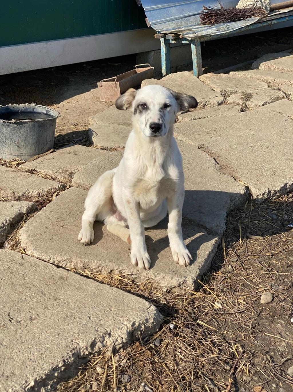 Mowgli- mâle- fourrière de Târgu Frumos - en fugue en Roumanie Mowgli10
