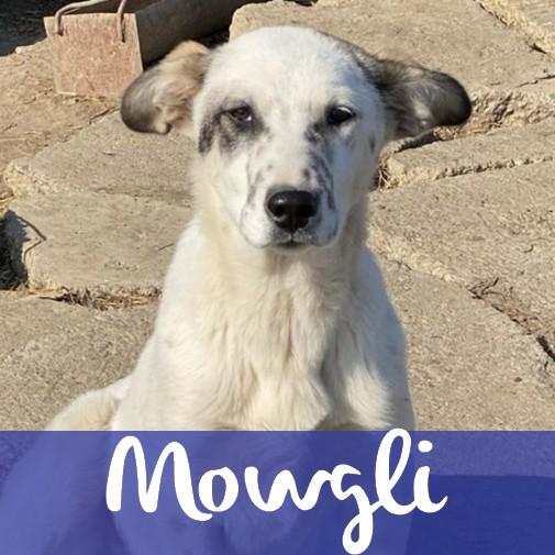 MowgliM
