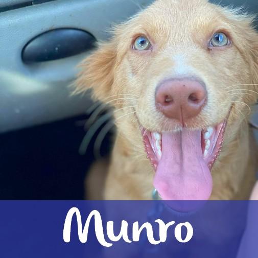 MunroM