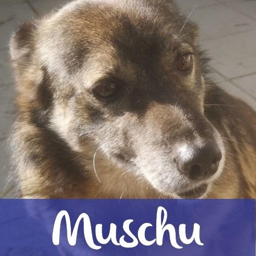 MuschuM