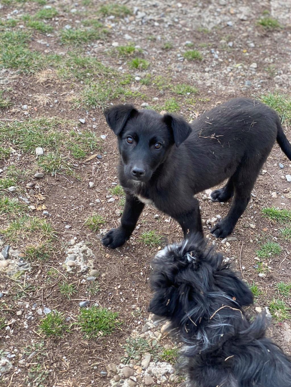 Mystic- femelle- fourrière de Târgu Frumos - Adoptée via Andrea Mystic15